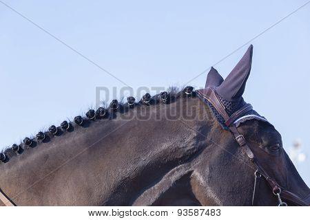 Horse Groomed Detail