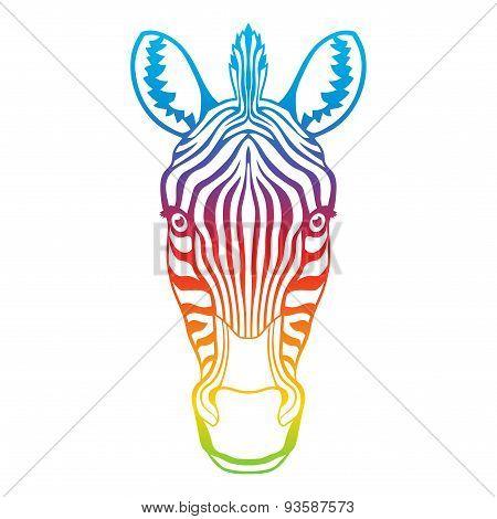 Zebra rainbow head