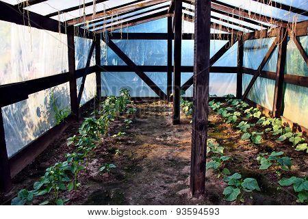 Greenhouse Foil