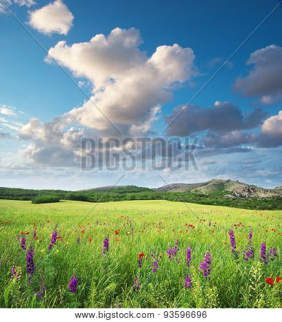 Spring flower in green meadow. Beautiful landscapes.
