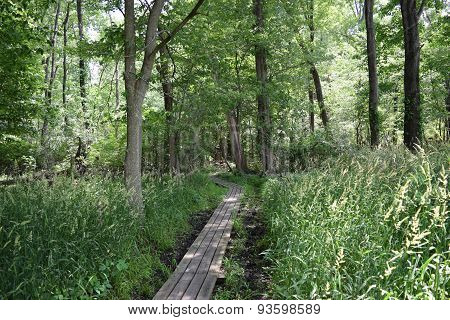 wooden walkway thru the woods