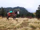 picture of horses eating  - the horse is eating grass on a field in Poonhill Nepal - JPG
