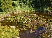 pic of fish pond  - Beautiful classical garden fish pond surrounded by grass gardening background - JPG