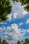 picture of natural phenomena  - soblakami beautiful sky and the halo effect in the frame of the branches - JPG