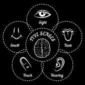 picture of senses  - Five senses scheme - JPG
