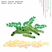 picture of malunggay  - Healthcare Concept Illustration of Moringa Pods with Vitamin A Vitamin B6 Riboflavin or B2 Vitamin C Calcium Iron Minerals Essential Nutrient for Life - JPG