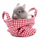 picture of cony  - Cute little rabbit bunny in red plaid bag - JPG
