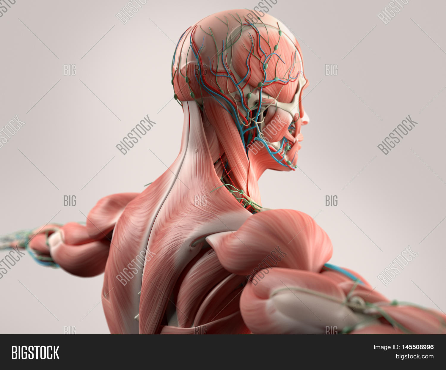 Human anatomy jobs