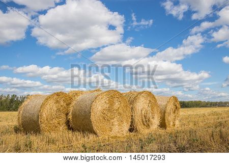 Straw Bales Harvest on Stubble field under blue sky