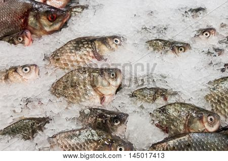 The Fresh Fish Lying In Ice