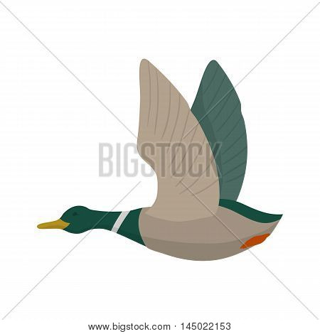 Flying mallard drake. Duck hunting. Vector wild bird. Flat isolated illustration on white background