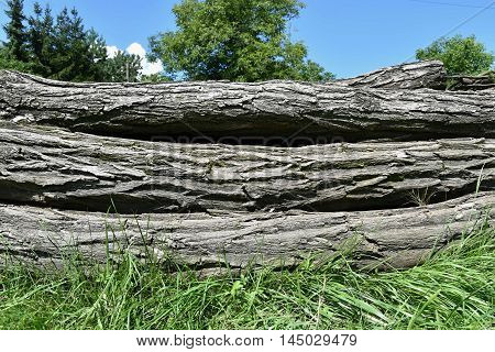 A pile of wooden logs. A pile of old wooden trunks.