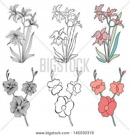 Decorative Orchids