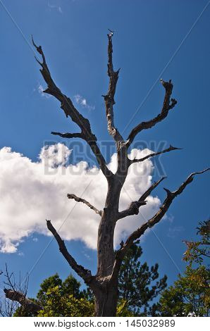Old dead tree on mountain Troglav against blue sky and white clouds at late summer, west Serbia