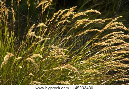 Dry grass on a morning sun at late summer in Serbia