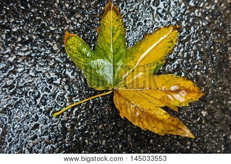 Yellow leaf on a wet pavement during autumn rain