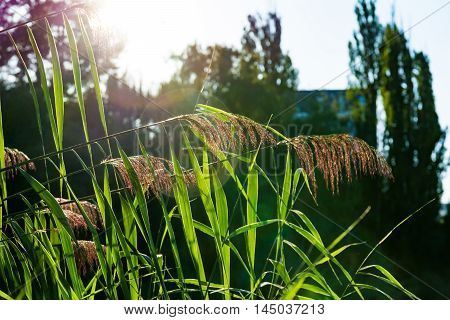 Feathery Plant Sunset Solar Flare Warm Outdoors Park