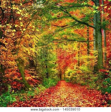 Colorful autumn forest scenery with a path covered in leaves
