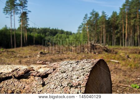 a tree trunk in a large forest