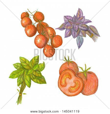 Raster realistic set of basil and tomatoes. Pizza and food theme Italian style illustration for recipe book covers culinary site or blog. Design element. Catering menu market or store image.
