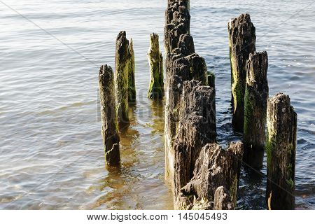 From the tranquil waters of the Baltic Sea protrude old and partially rotted wooden breakwaters in Kolobrzeg in Poland