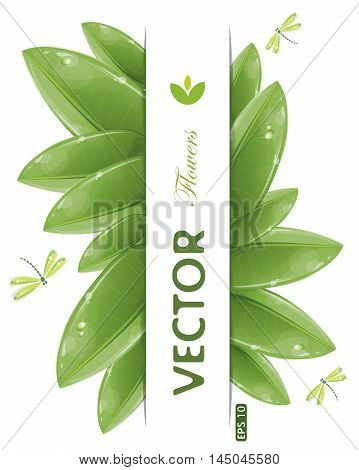 Green leaves design with flying dragonflies isolated on white, vector illustration, eps-10