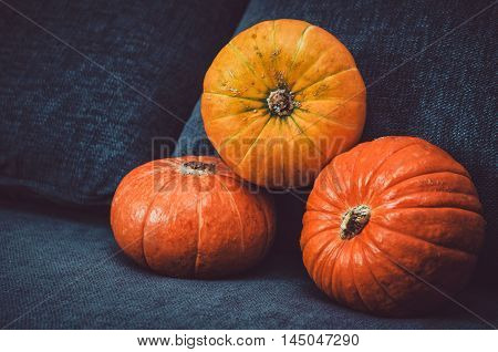Assortment of orange pumpkins on dark background. Fall symbol Thanksgiving Day concept. Still life rustic style. Halloween holiday. Autumn picture for your design food blog.