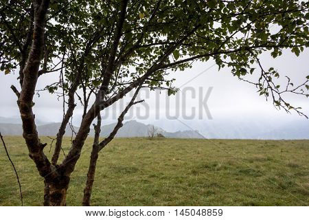 tree, green glade, nature, fog, landscape, branches