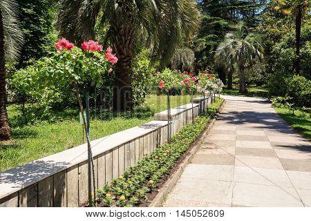 The arboretum in Sochi, Russia, summer day