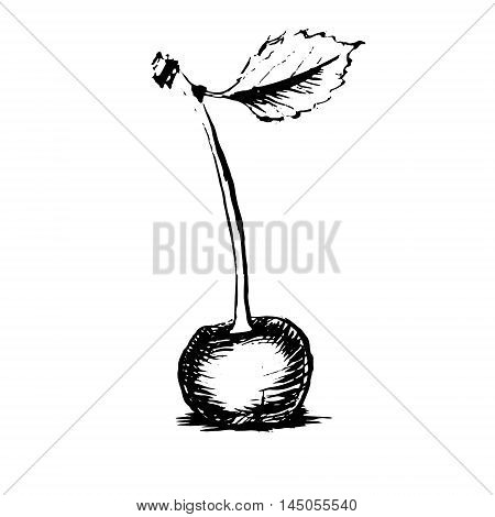 cherry sweet cherry. drawing black and white silhouette graphic icon vector