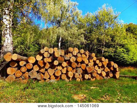 Tree logs after wood exploitation on meadow near deciduous forest in wild nature