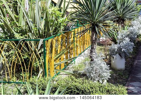 On a plot near the house for decorative landscaping planted palm trees and other subtropical plants.