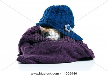 Adorable little kitten sleeping inside warm wool jumper isolated on white background