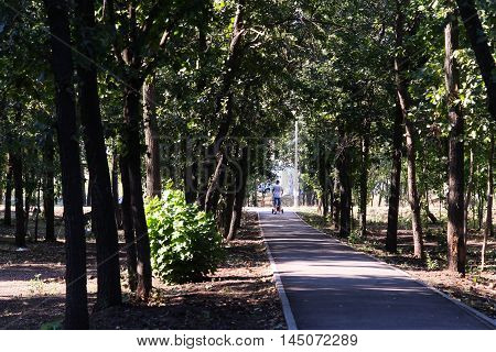the road leading to the park road, park, nature, season,