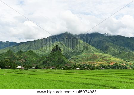 Agriculture Green Rice fields and rice terraced on mountain at SAPA Lao Cai Mu Cang Chai Vietnam. The most of area is rice terraced. nature and landscape rice fields