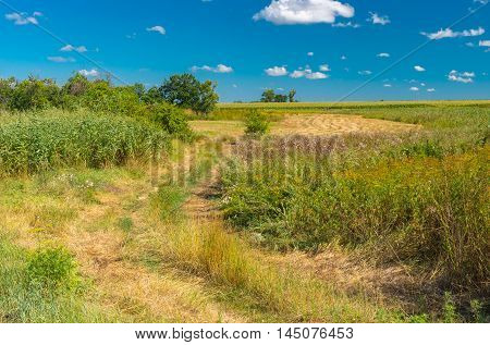Summer landscape with an earth road in overgrown meadow
