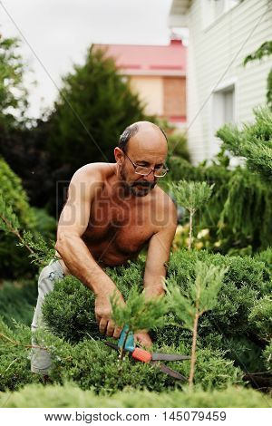 Man gardener (60 years old) with clippers in hand making art cutting juniper. Selective focus.