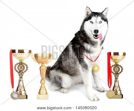 Beautiful cute husky with trophy cups and medals isolated on white