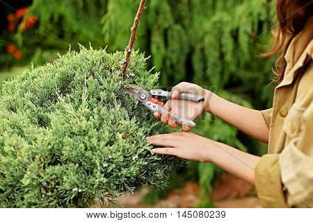 Girl gardener in working clothes and straw hat cuts garden scissors evergreen. Close-up view of hands.