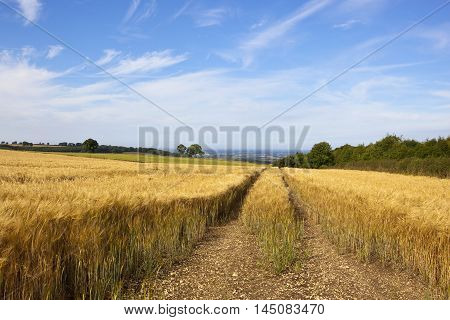 Tyre Tracks In Barley
