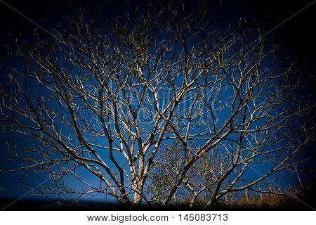 .silueta de árvore seca com céu azul na parte de trás