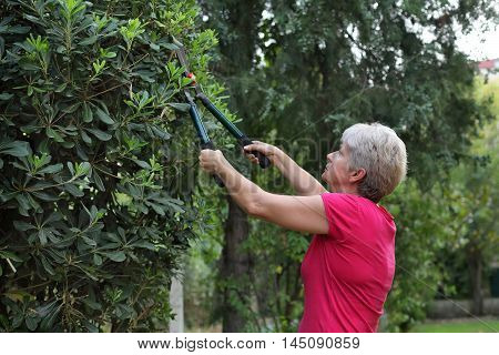 Landscaping adult woman cut tree in a garden