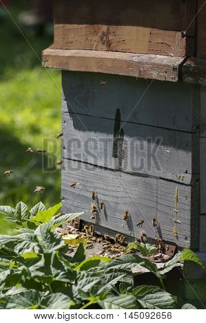 Hive in an apiary with bees flying around
