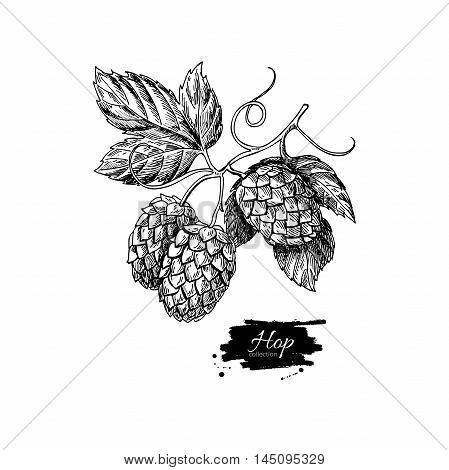 Hop plant vector drawing illustration. Hand drawn black beer hopes with leaves on branch. Vintage isolated object on white background. Engraved element for label banner icon menu oktoberfest