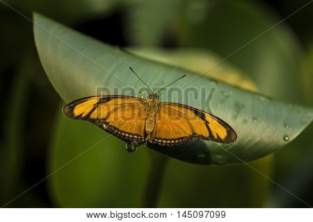 Tropical Butterfly Insect Summer Wildlife Impression Exotic