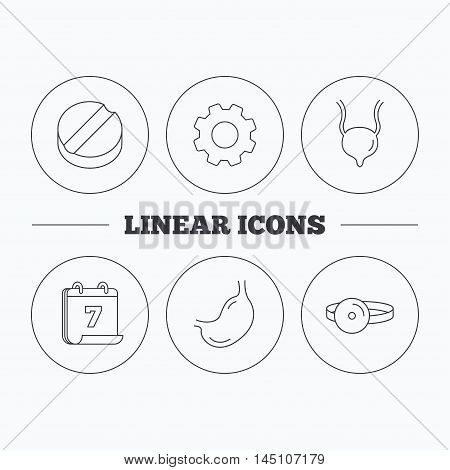 Medical mirror, tablet and stomach organ icons. Urinary bladder linear sign. Flat cogwheel and calendar symbols. Linear icons in circle buttons. Vector