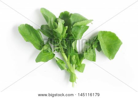 Fresh Watercress Leaves over a white background