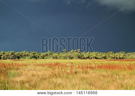 A summer storms rages in the distance over the Florida Everglades