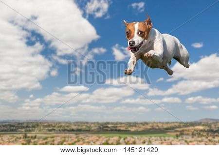 Energetic Jack Russell Terrier Dog Flying In The Sky With Clouds Behind and Houses Below.