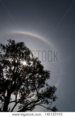 Nature Phenomenon Trees with Sun halo background.